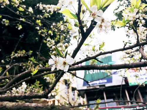 Základová fotografie zdarma na téma jarní květina, květ