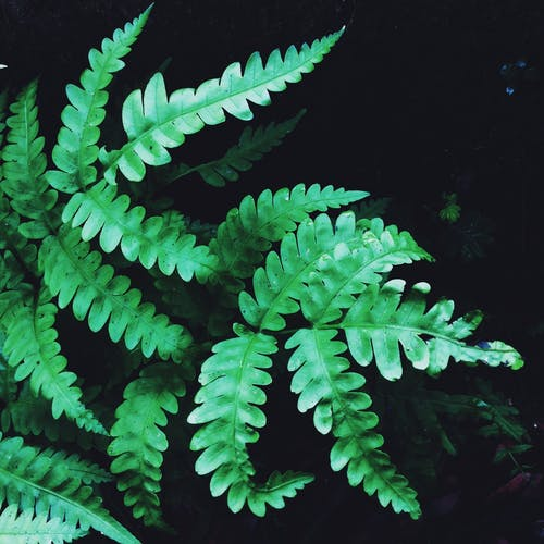Základová fotografie zdarma na téma listy, tmavě zelená