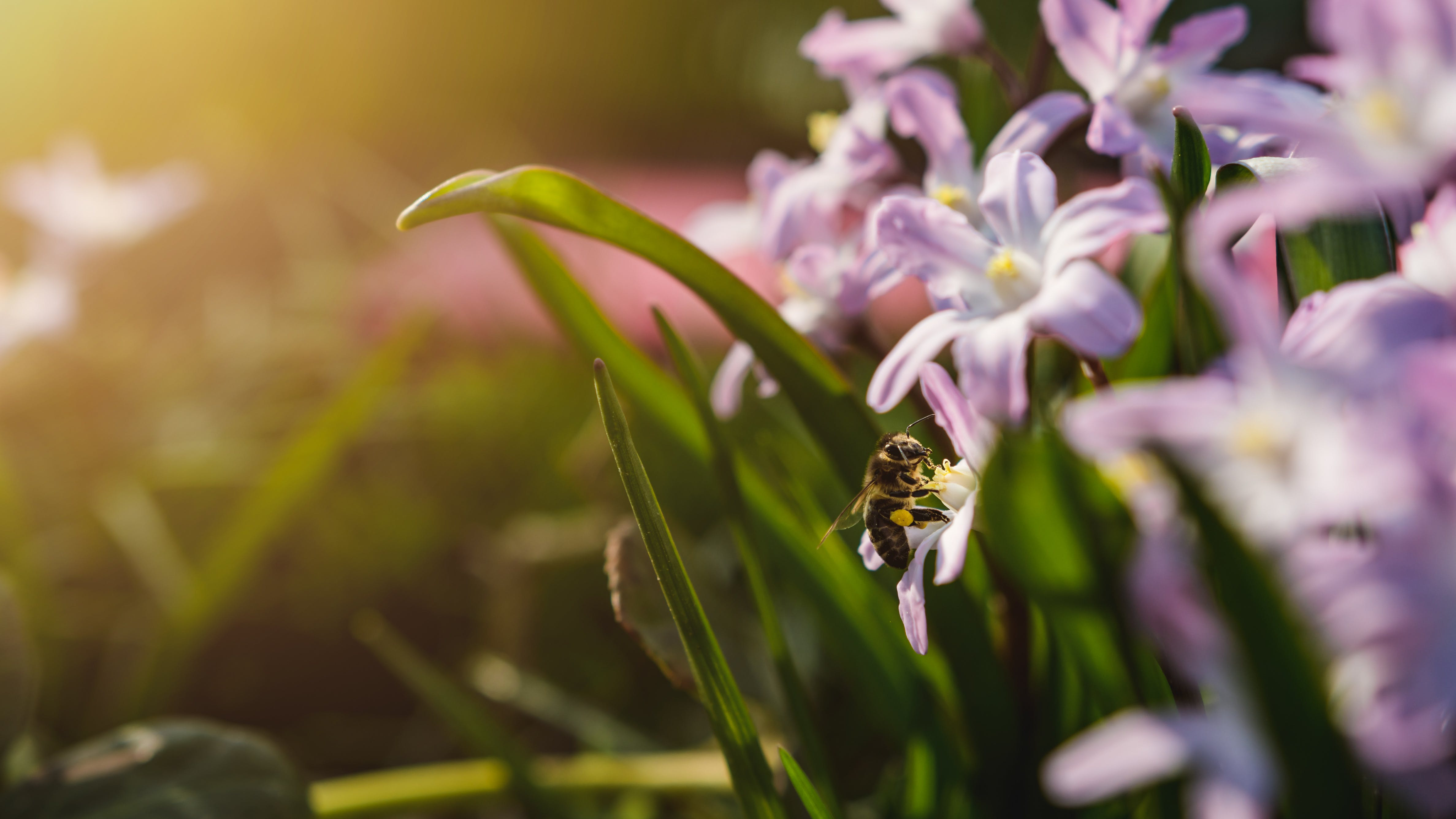 Free stock photo of beauty, bee, bloom, blossoms