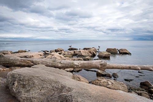 Photos gratuites de cailloux, lac ontario, oies