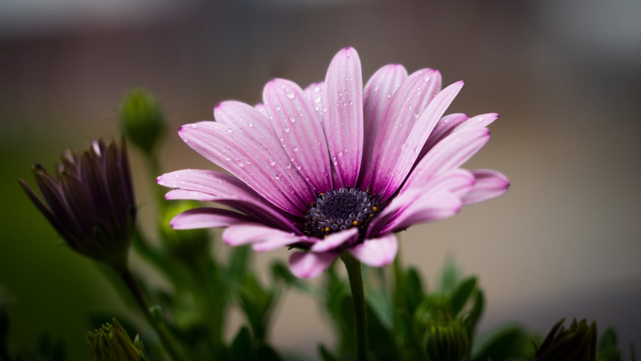 blomster, dug, flora