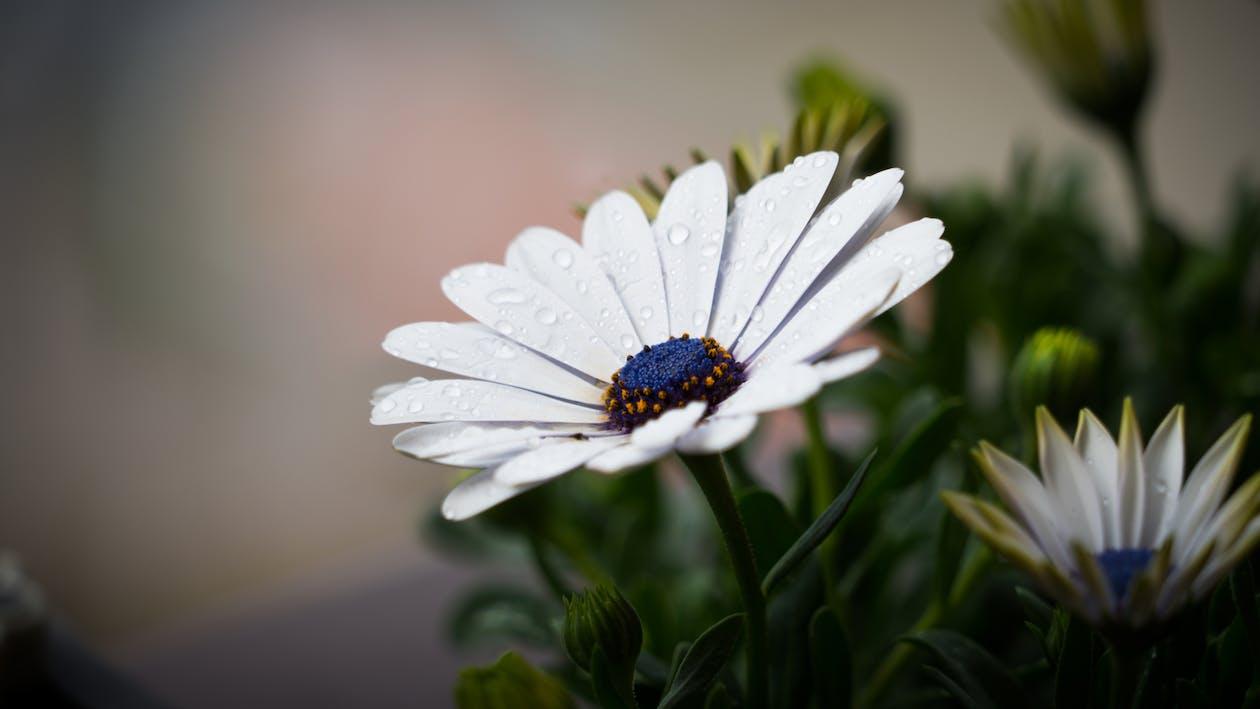 blomst, dug, flora