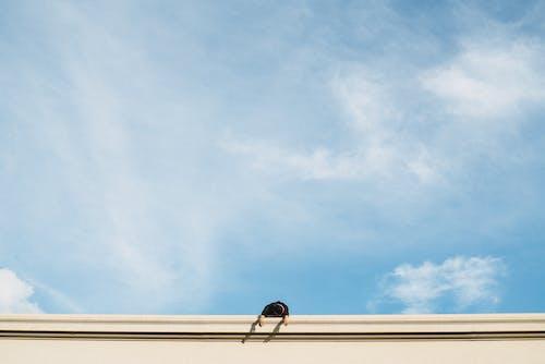 Základová fotografie zdarma na téma denní světlo, lehký, modrá obloha, mrak