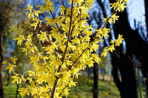 공원, 관목, 나무, 노란 꽃의 무료 스톡 사진