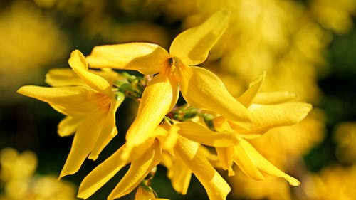 Yellow Flowers on Macro Shot
