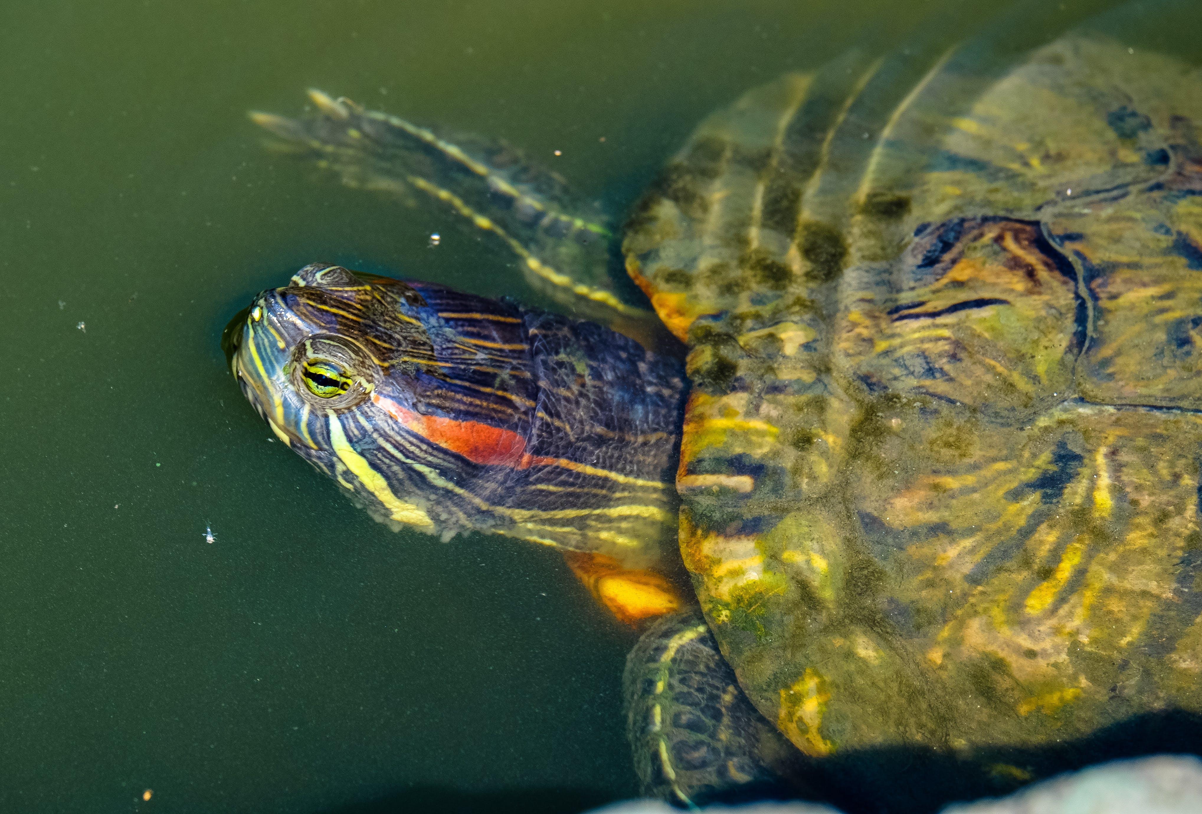 animal, aquatic, close -up
