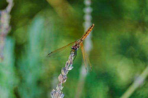 Foto profissional grátis de erro, inseto, libélula, macro