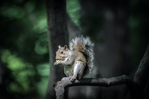 Foto profissional grátis de animais selvagens, animal, esquilo, filial