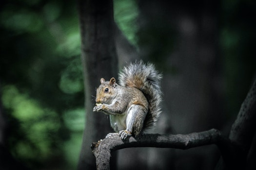 Brown and Black Squirrel Standing on Tree Branch during Daytime