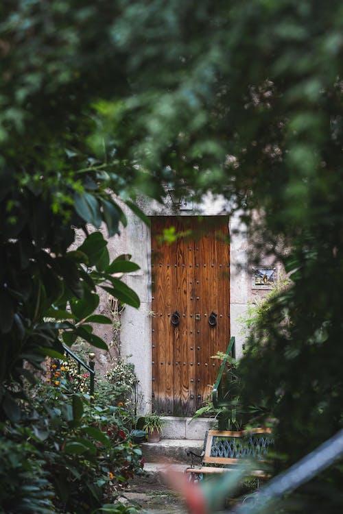 Photos gratuites de abandonné, arbre, architecture