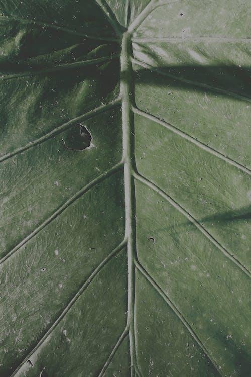 Foto stok gratis abstrak, alam, alami