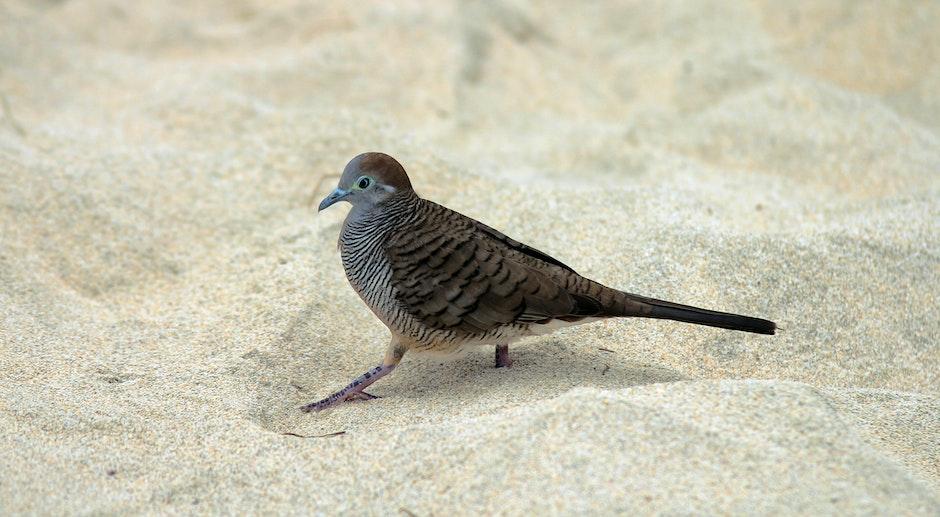 Gray and Black Bird on White Sand during Daytime