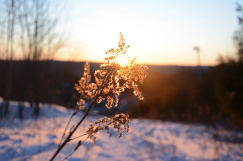 Foto profissional grátis de Canadá, leve, light, luz