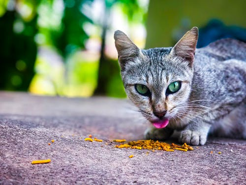 Free stock photo of cat, cat lover, love, small animal