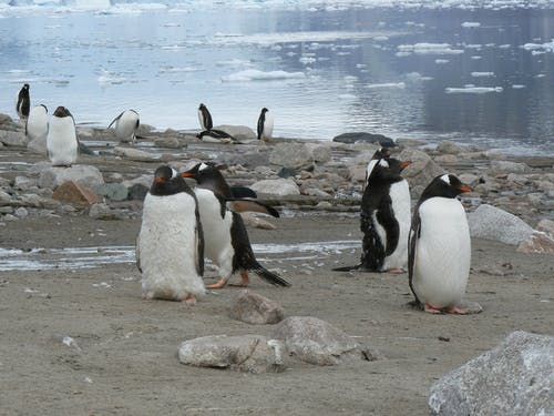 Photo of Penguins on the Shore