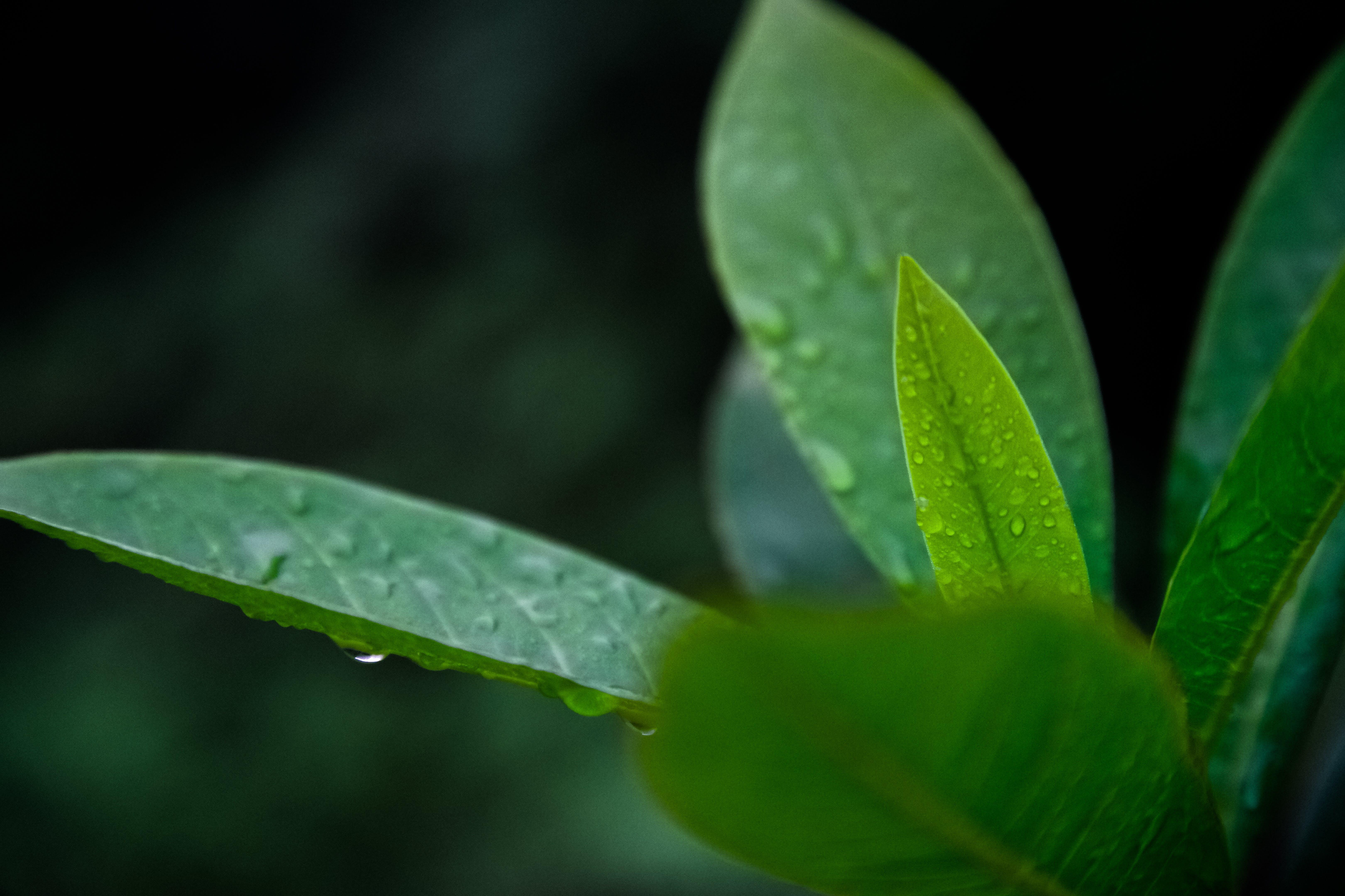 天性, 工厂, 綠色, 露 的 免费素材照片