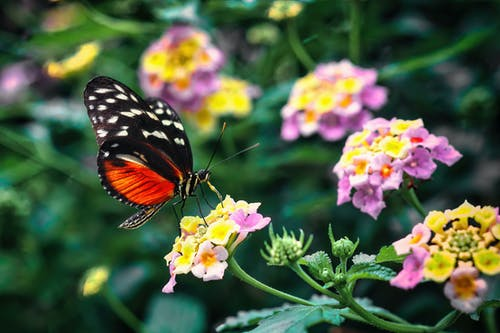 Macro Shot of a Monarch Butterfly Perched on a Flower
