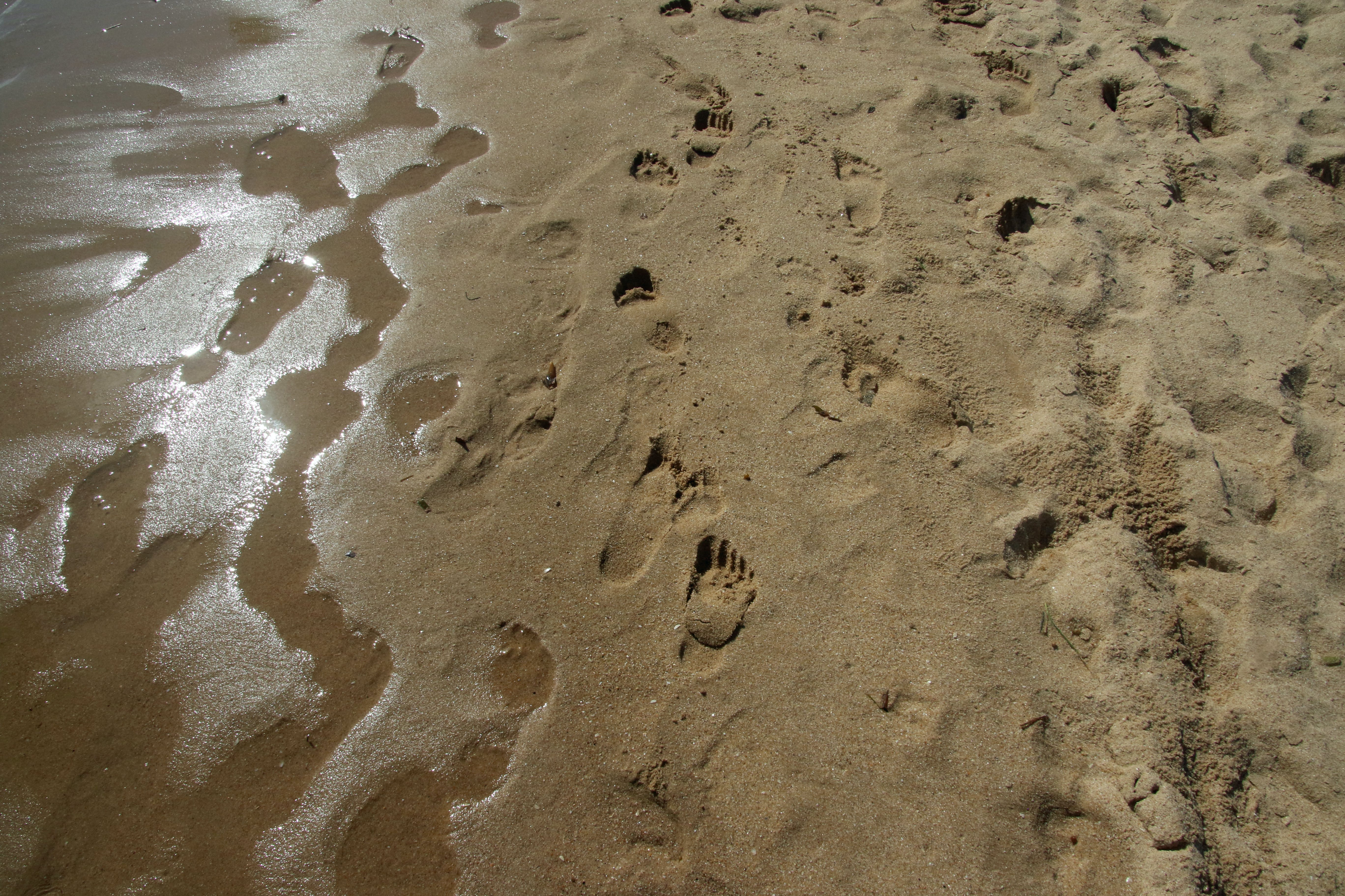 Free stock photo of blue sky, footsteps, holiday, island