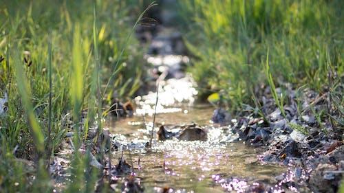戶外, 流, 湿地, 草 的 免费素材照片