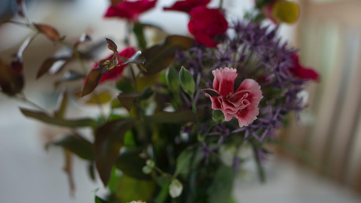 Free stock photo of flower arrangement, flowers, leafs