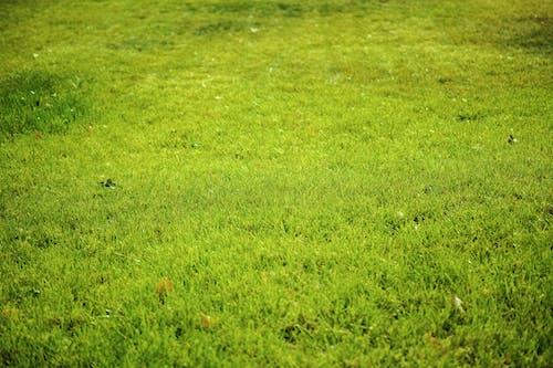 Photos gratuites de herbe, vert
