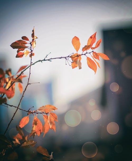 Foto d'estoc gratuïta de branca, brillant, color, flora