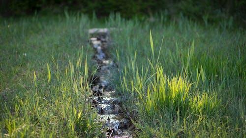 天性, 流, 湿地, 綠色 的 免费素材照片