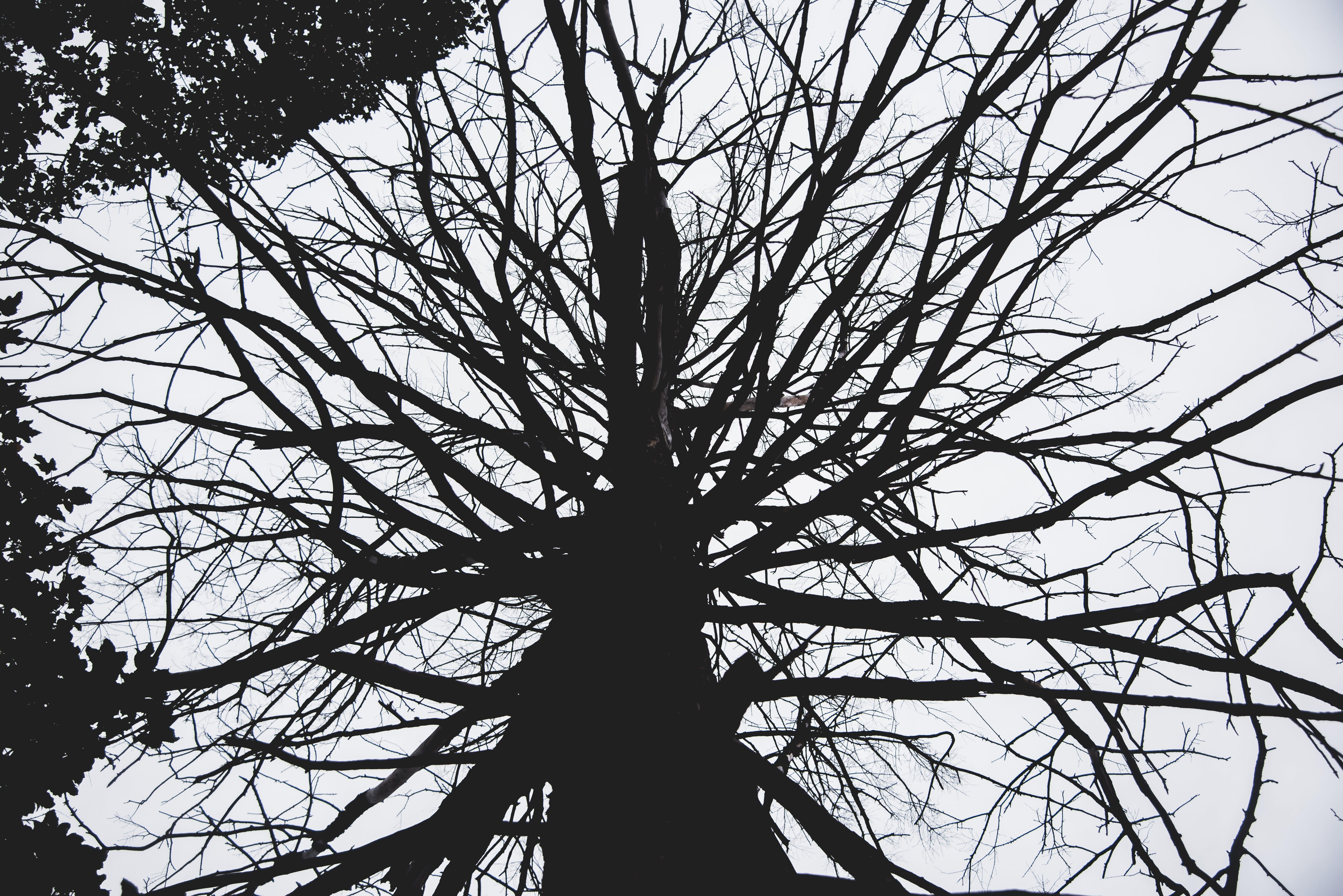 Free stock photo of trees, fall