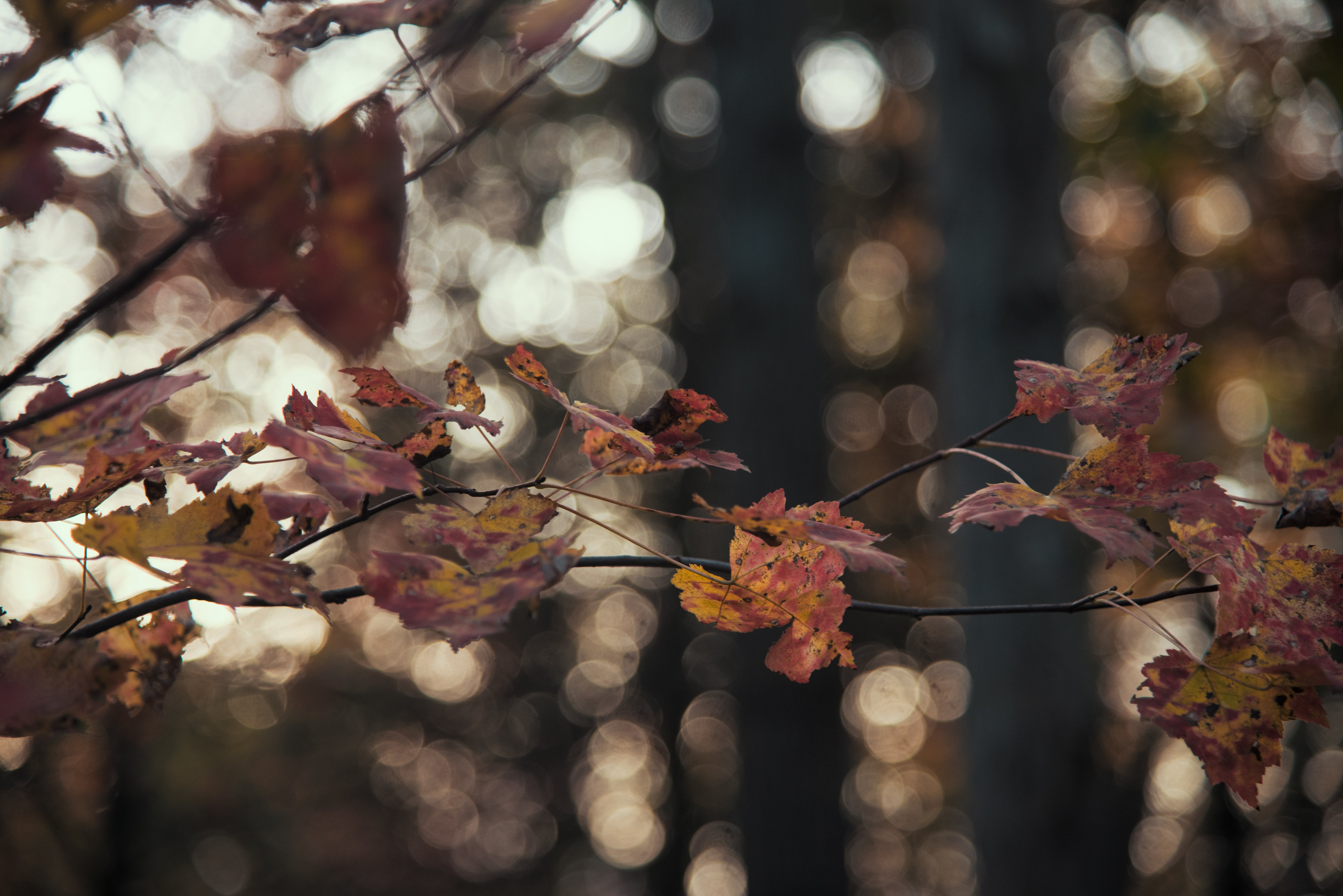 Free stock photo of autumn leaf, autumn leaves, brown, landscape