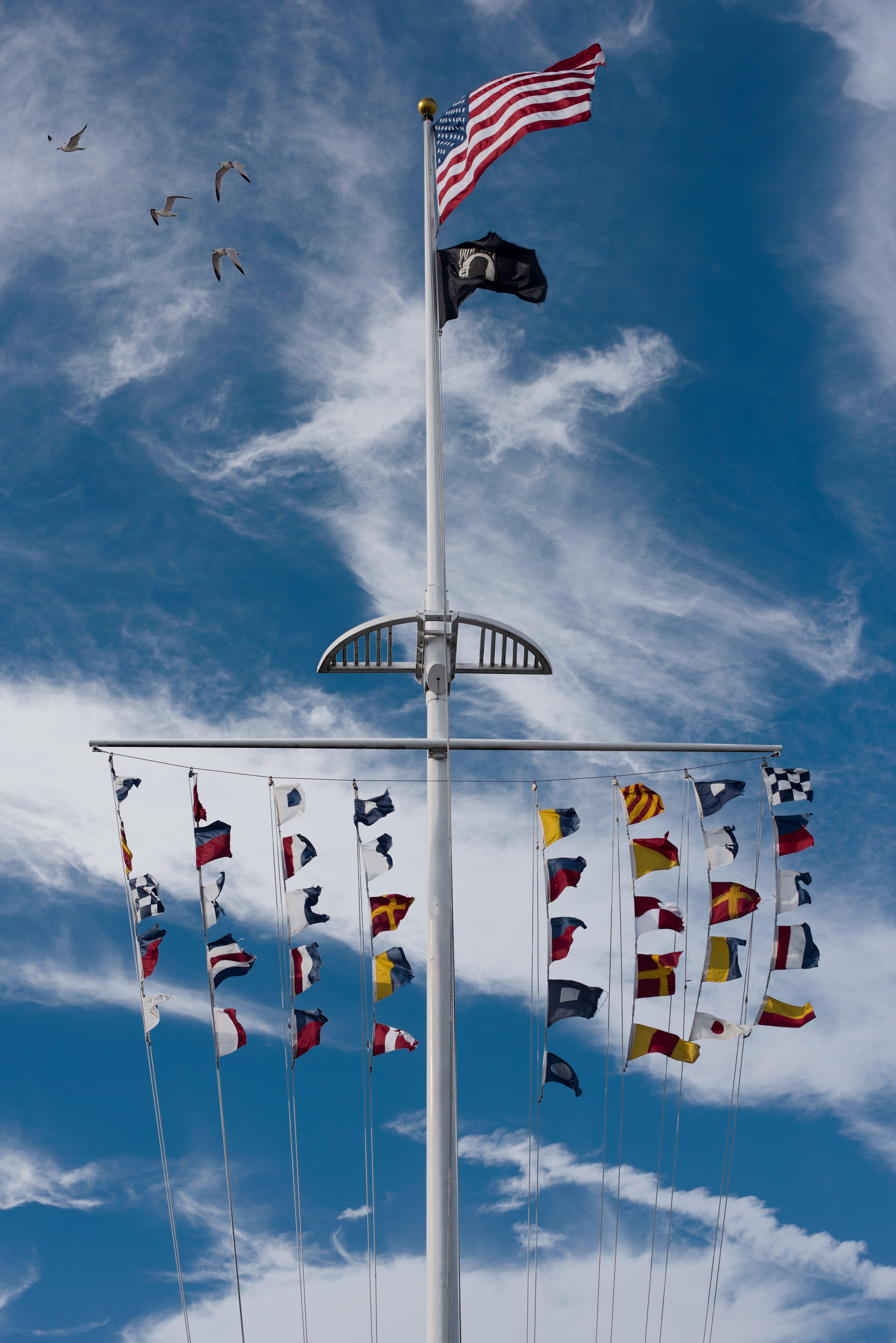 Free stock photo of American flag, beach, birds, breezy