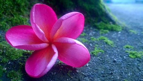 Gratis lagerfoto af attraktiv, blomst, fotografering fra lav vinkel, friske blomster