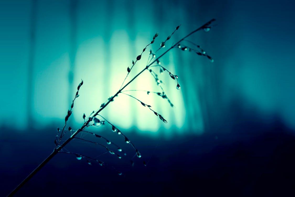 Dew on Plant Photo