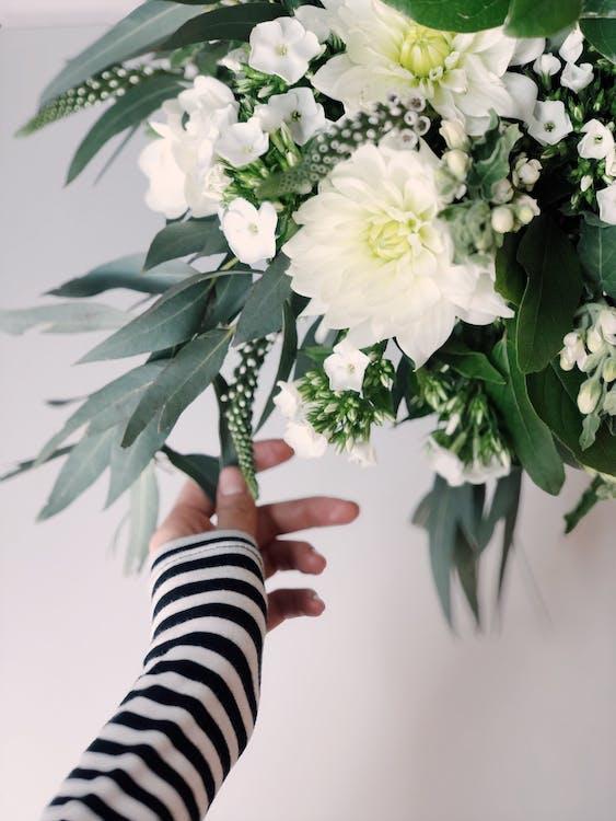 barvy, bílé pozadí, botanický