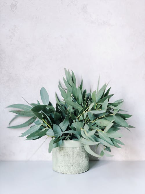 Photo of Plants On White Pot