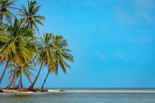 Foto profissional grátis de água, água azul-turquesa, areia
