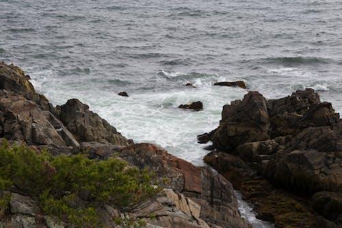Imagine de stoc gratuită din apă, arbori, coastă, copaci