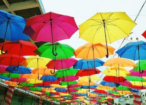 Základová fotografie zdarma na téma barevná paleta, barevný, deštníky