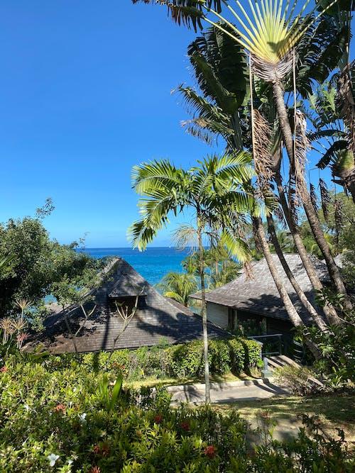 Gratis stockfoto met blauwgroen, boom, eiland