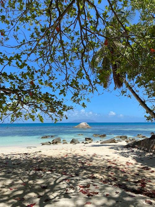 Gratis stockfoto met boom, eiland, h2o