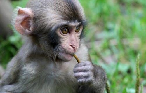 Ảnh lưu trữ miễn phí về chụp ảnh động vật, con khỉ, con vật, dễ thương