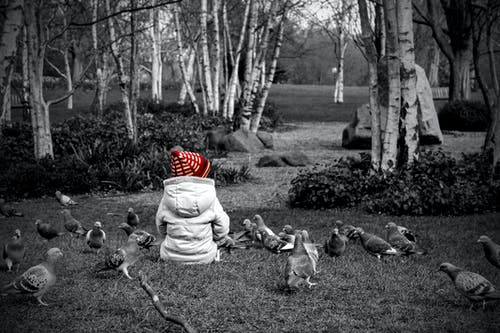 Selective Colour Photography Of Toddler Sitting On Grass Next to Pigeons