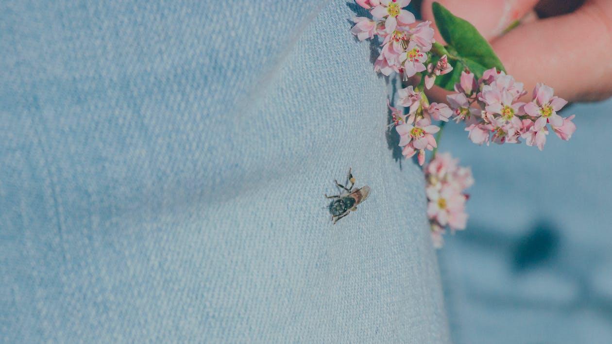 곤충, 곤충학, 꽃