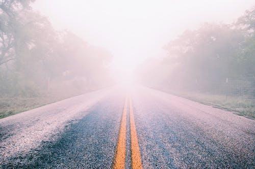 Gratis arkivbilde med asfalt, tåkete, trær, vei