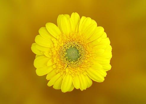 flor-amarela