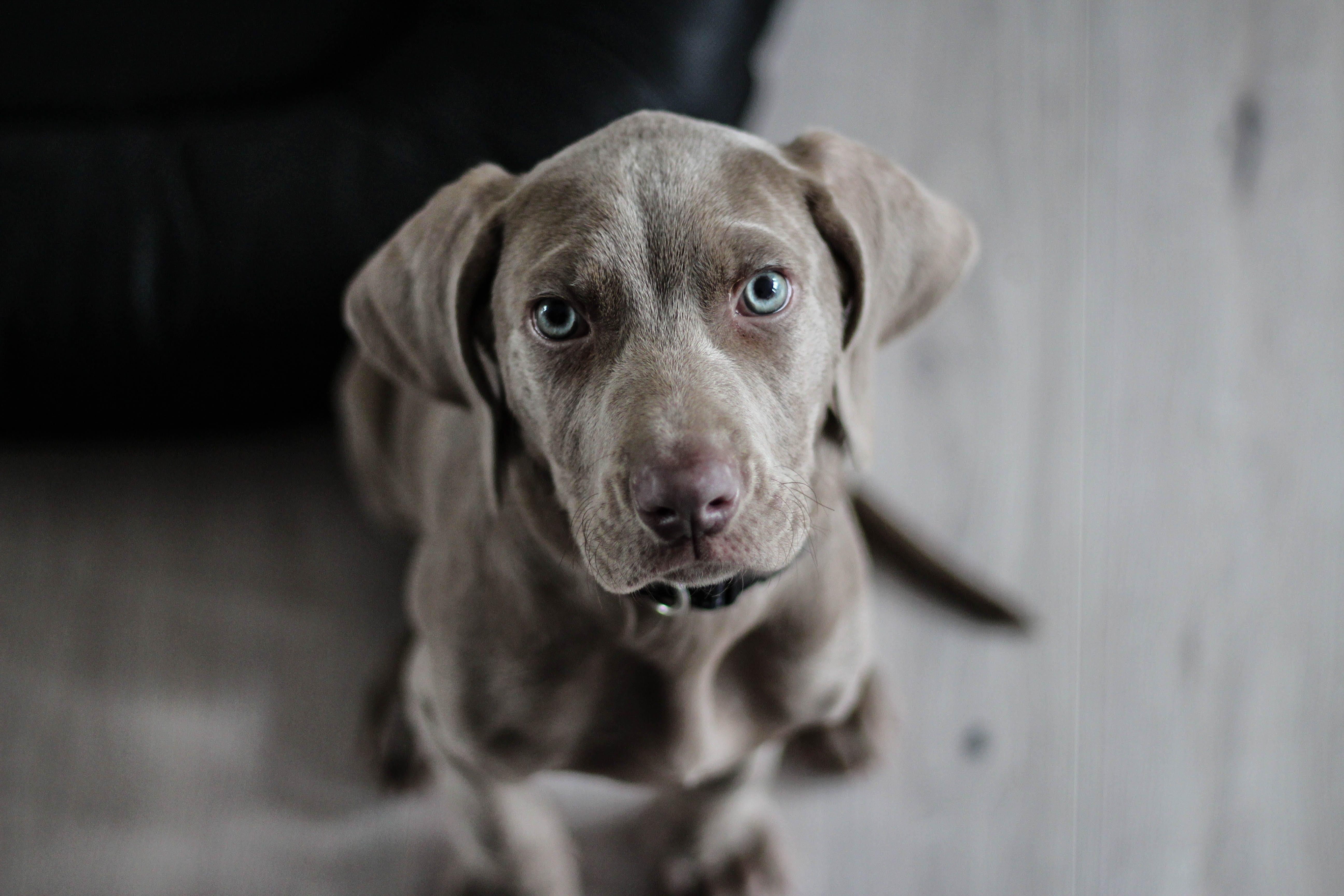 Black Short Coat Medium Dog on Floor