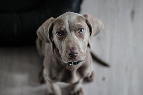 Kostnadsfri bild av djur, djurfotografi, hund