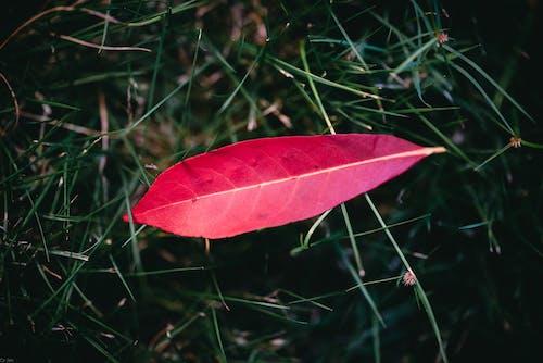 Kostnadsfri bild av blad, blomma, dagg
