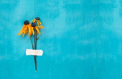 Ảnh lưu trữ miễn phí về hoa, Hoa màu vàng, nền xanh