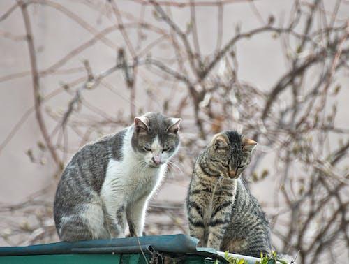 고양이, 배경이 흐린, 사랑, 수코양이의 무료 스톡 사진