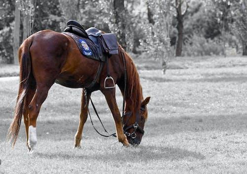 공원, 나무, 말, 배경이 흐린의 무료 스톡 사진